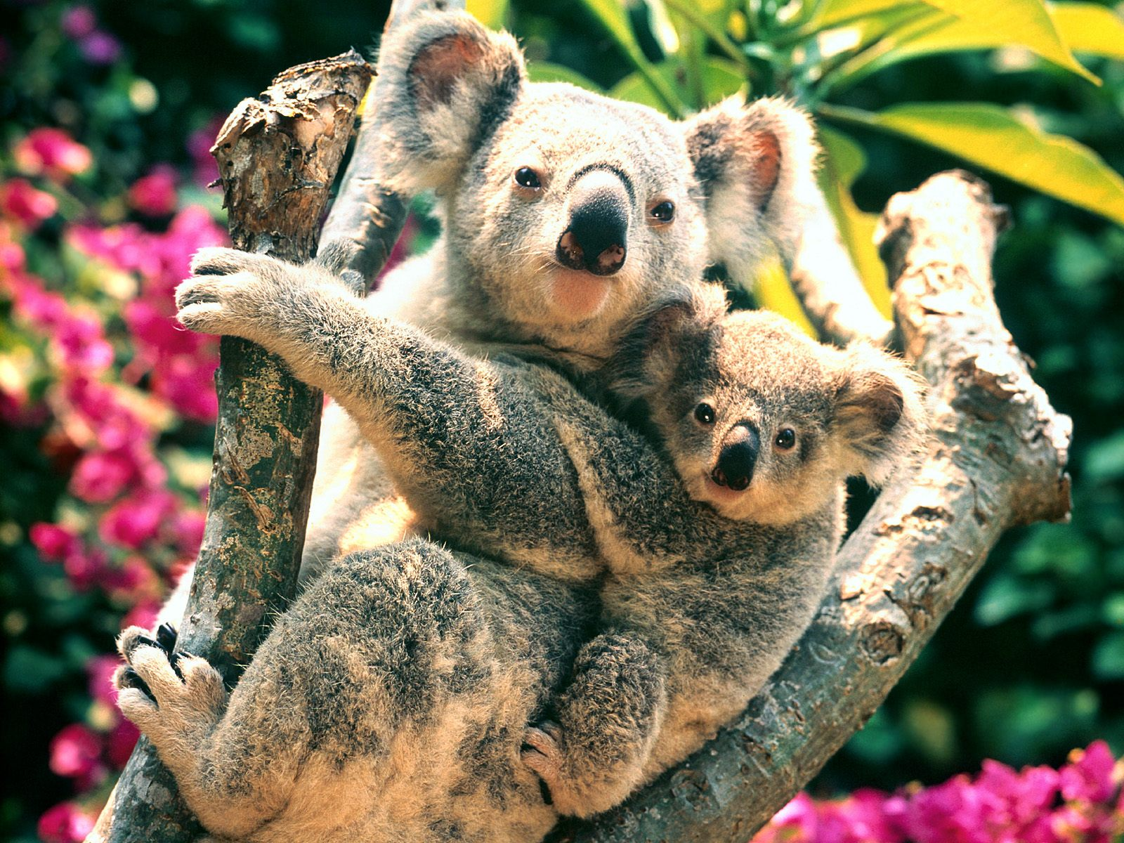 Tiere in australien hintergrundbild tiere in australien