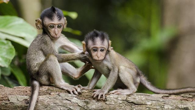 Kids N Fun De 34 Ausmalbilder Von Affen