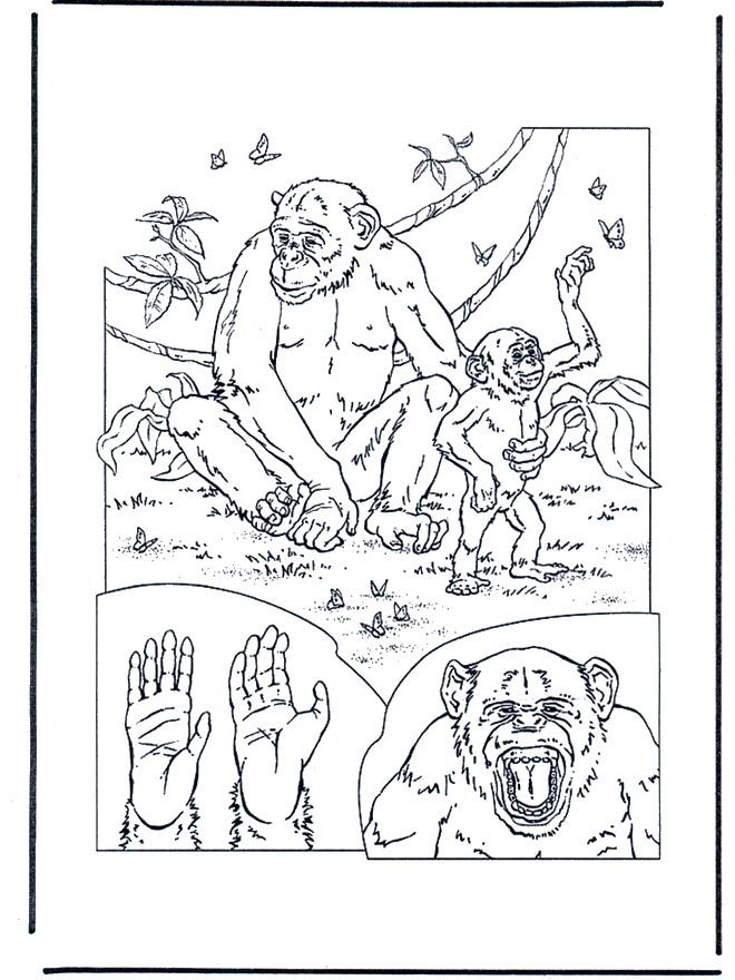 Kids-n-fun.de | 34 Ausmalbilder von Affen