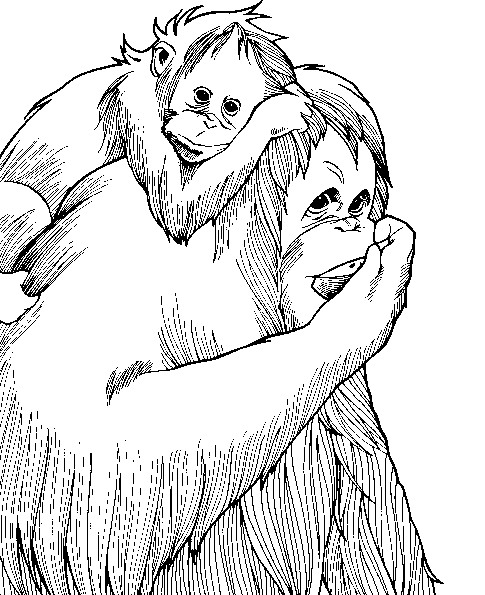 Berühmt Süsse Affen Malvorlagen Bilder - Ideen färben - blsbooks.com