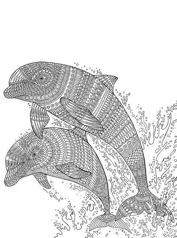 kidsnfunde  malvorlage delfine schwer delphin schwer 04