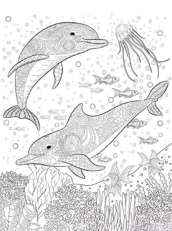 kidsnfunde  malvorlage delfine schwer delphin schwer 13