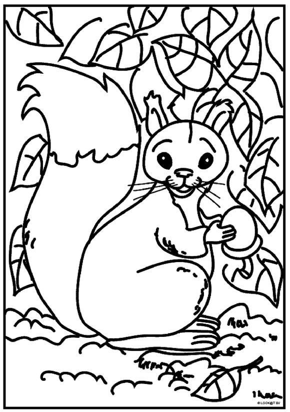kidsnfunde  13 ausmalbilder von eichhörnchen