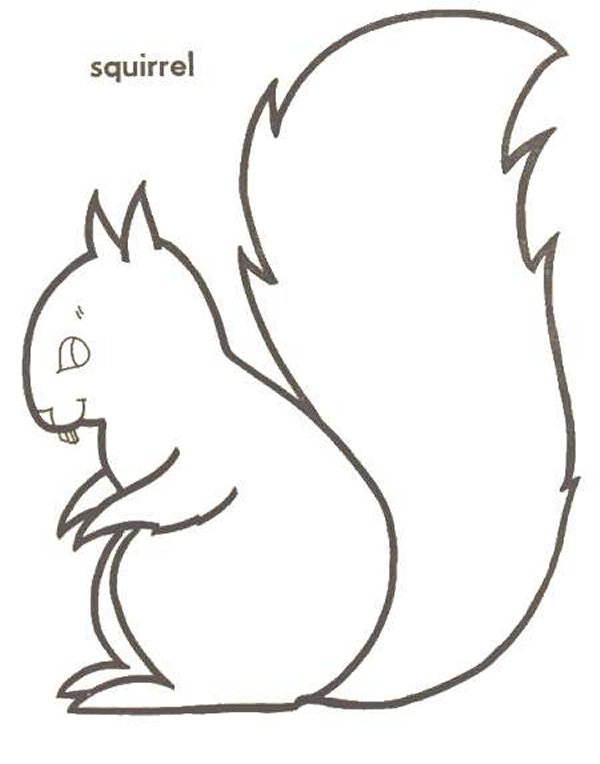 Kids N Fun De 13 Ausmalbilder Von Eichhörnchen