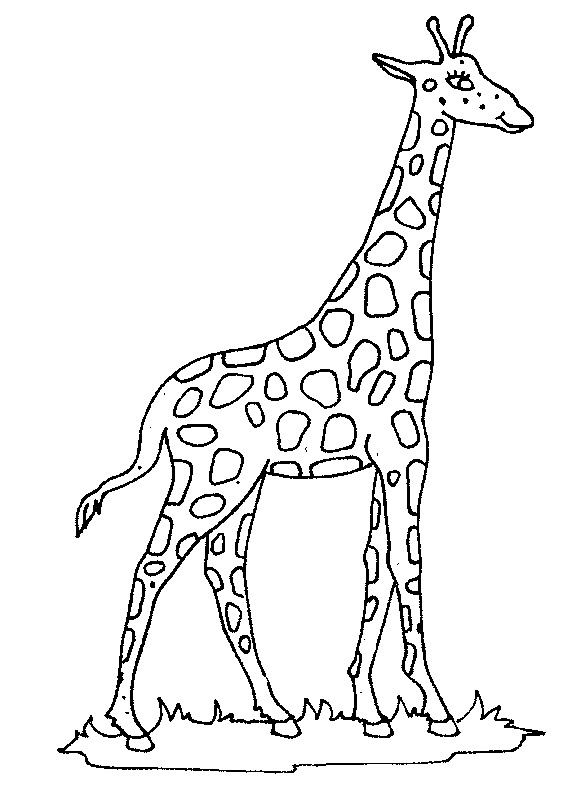 Giraffe Malvorlagen Gratis Coloring And Malvorlagan