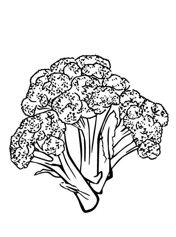 kidsnfunde  malvorlage gemüse brokkoli 4