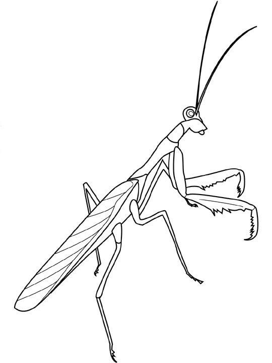 Kids N Fun De Malvorlage Insekten Insekten