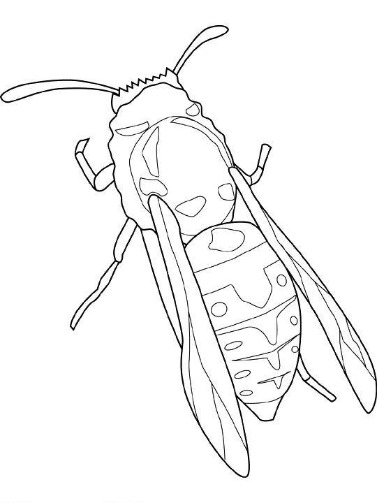 kidsnfunde  malvorlage insekten insekten