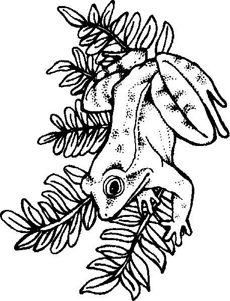 kidsnfunde  persönliche malvorlage erstellen frosche
