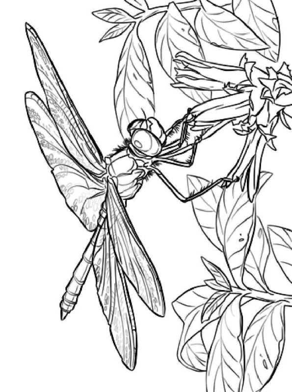 kidsnfunde  malvorlage libellen libelle auf blume