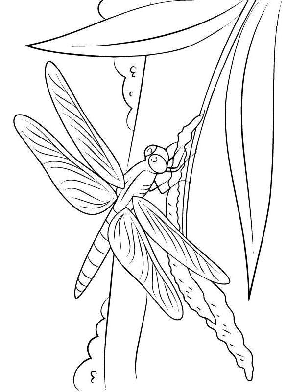kidsnfunde  malvorlage libellen libelle auf ast