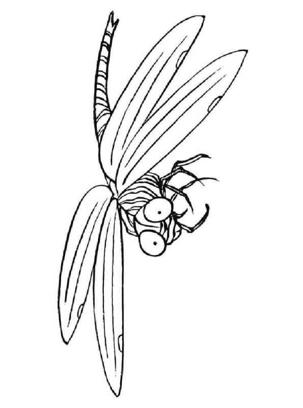 kidsnfunde  malvorlage libellen libelle