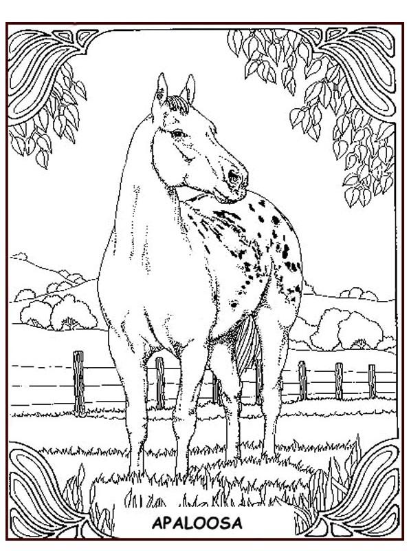 n de malvorlage pferde pferde