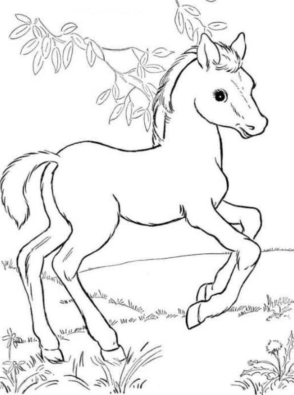 kidsnfunde  63 ausmalbilder von pferde