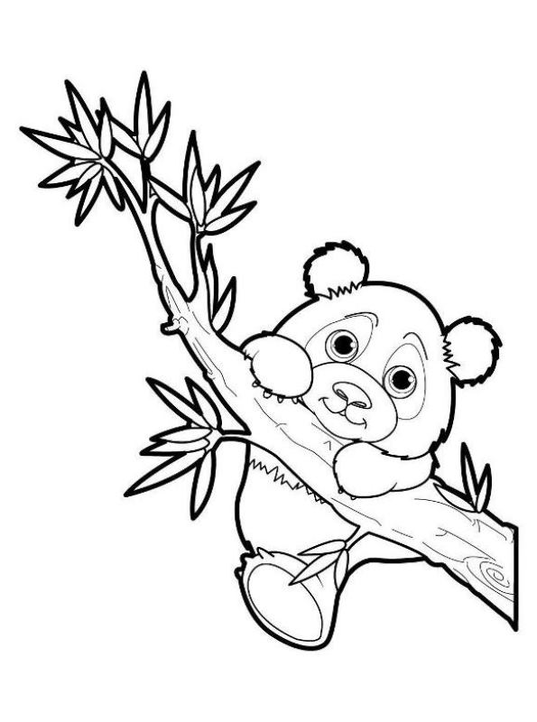 kidsnfunde  malvorlage panda panda