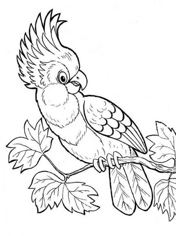 kidsnfunde  malvorlage papageien kakadu 2