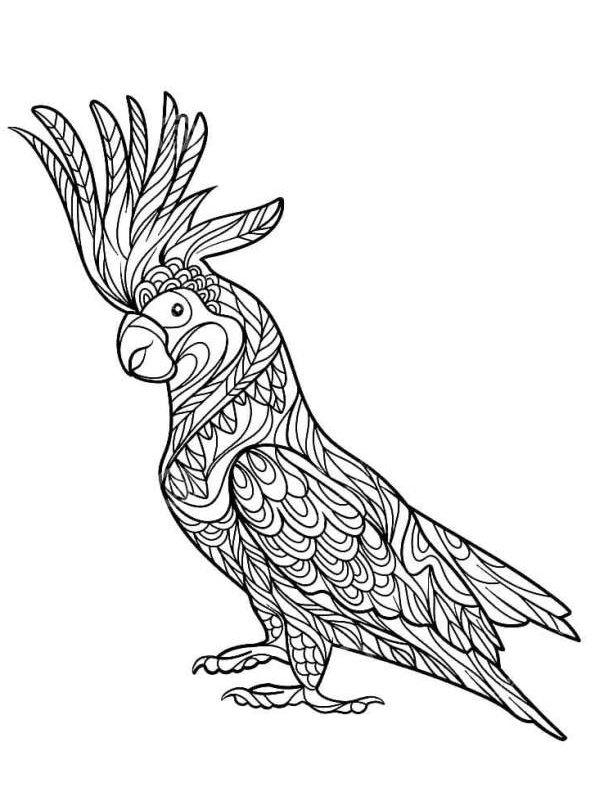 kidsnfunde  malvorlage papageien kakadu erwachsene
