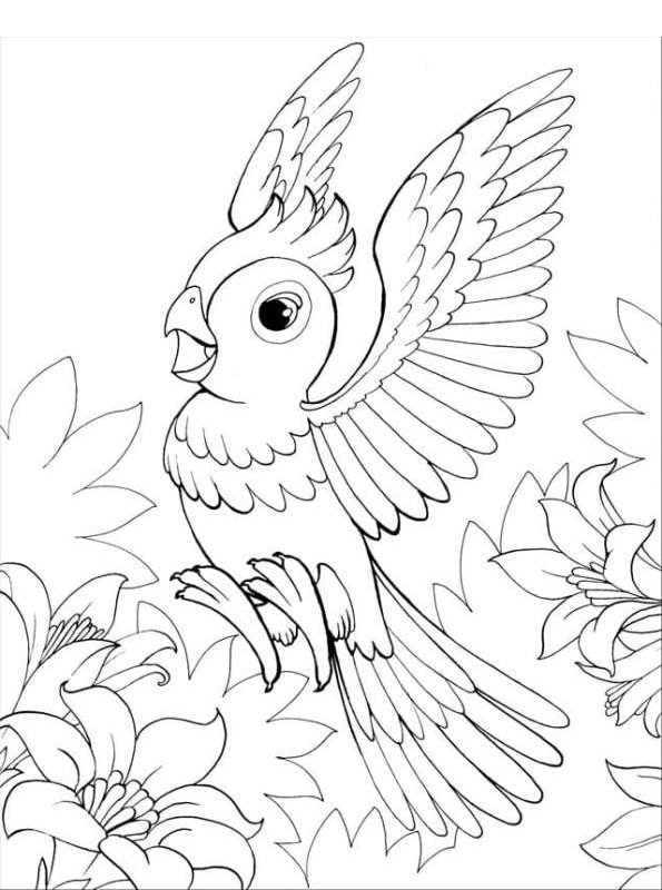 kidsnfunde  malvorlage papageien papagei 01