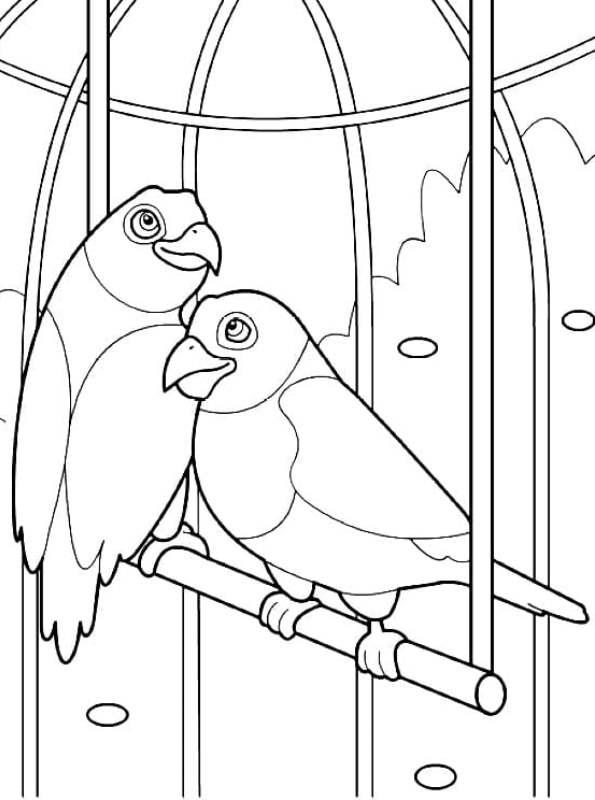 kidsnfunde  malvorlage papageien papagei 11