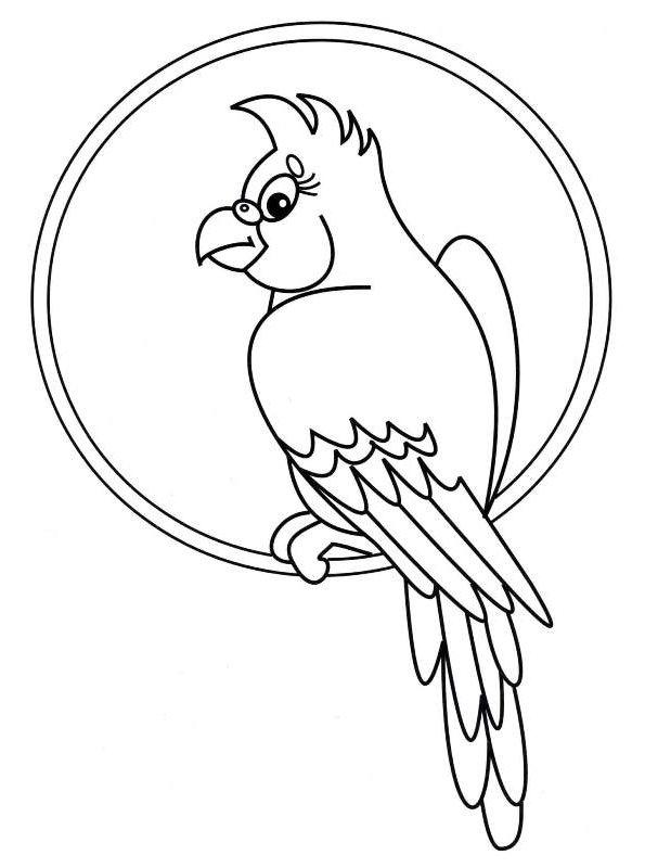 kidsnfunde  persönliche malvorlage erstellen papagei
