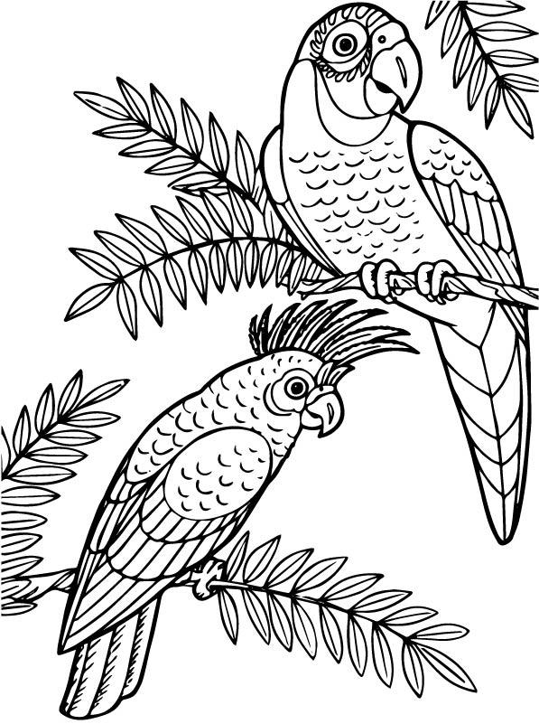 kidsnfunde  malvorlage papageien papagei und kakadu