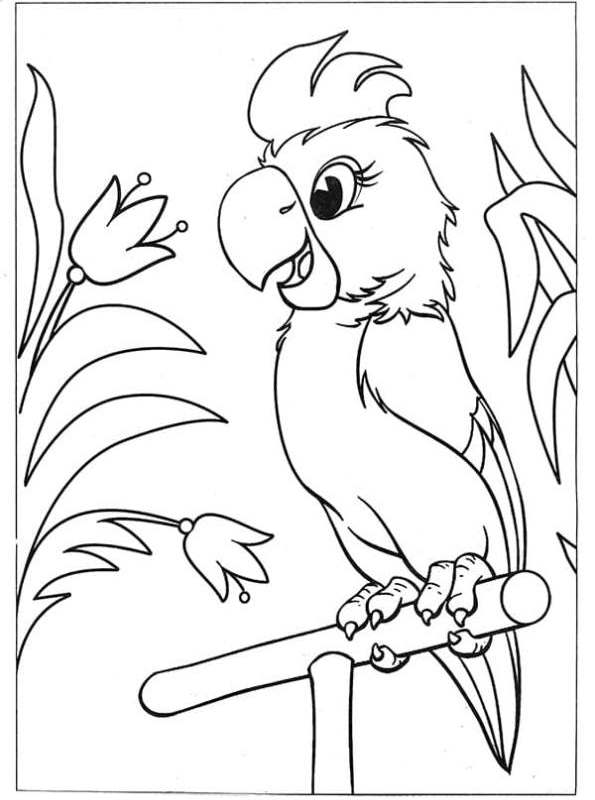 kidsnfunde  malvorlage papageien papageienblume