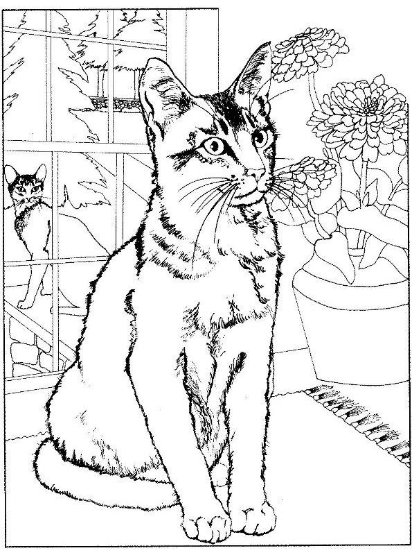 Ausmalbilder Zum Ausdrucken Katzen : Kids N Fun De 68 Ausmalbilder Von Katze