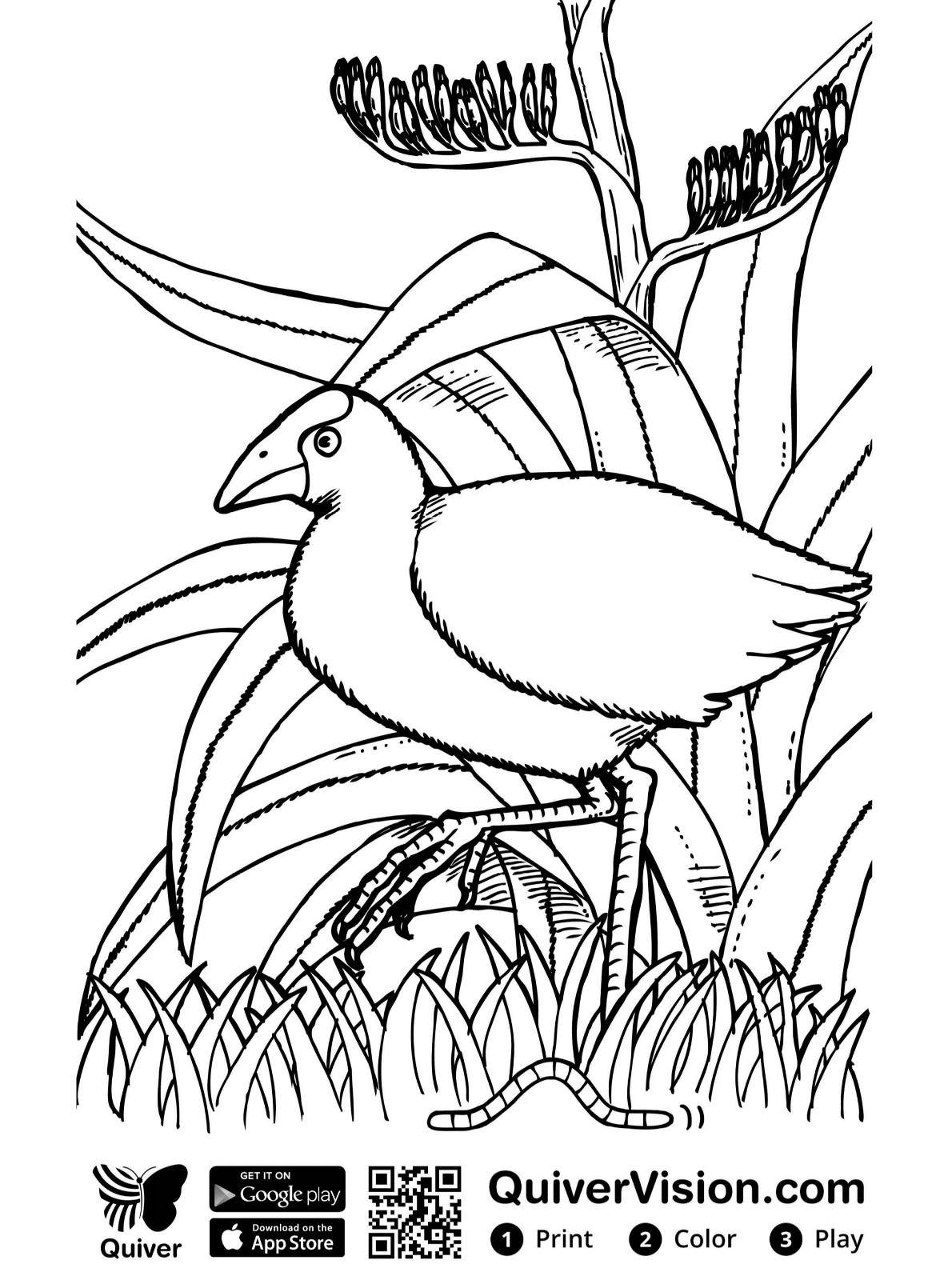 kidsnfunde  vogel