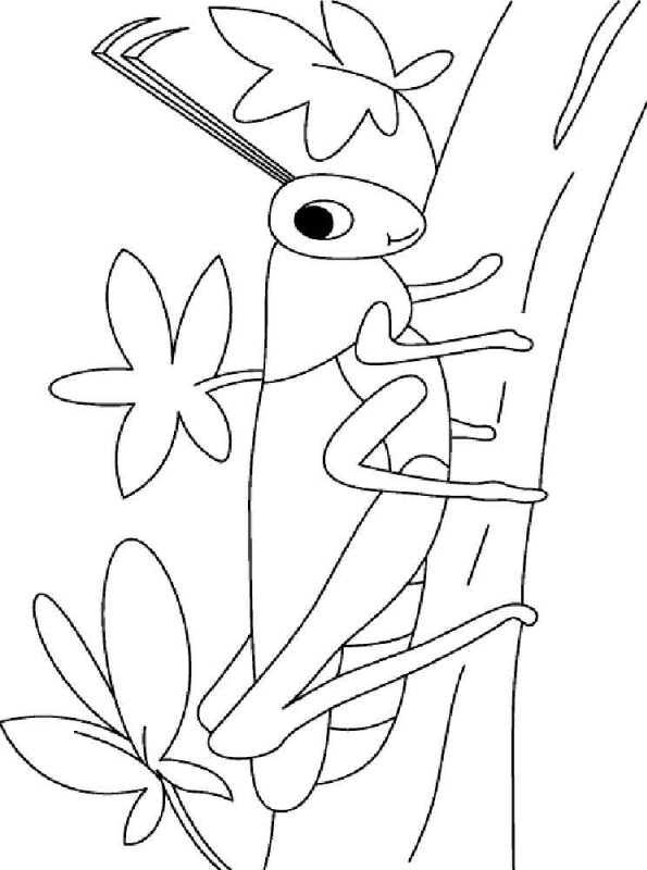 kidsnfunde  malvorlage heuschrecken heuschrecke 8