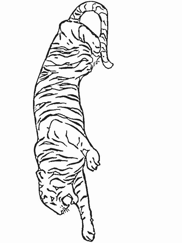 kidsnfunde  malvorlage tigers tigers
