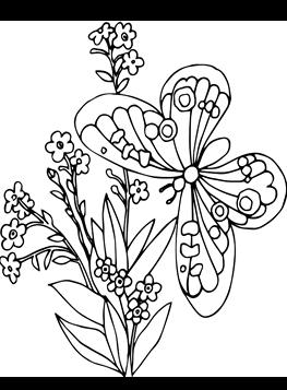 Schmetterling zum ausmalen pdf