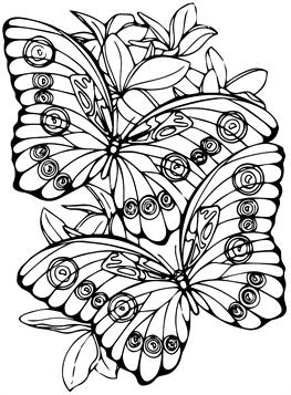 Ausmalen schmetterling zum bilder 61 Schmetterling