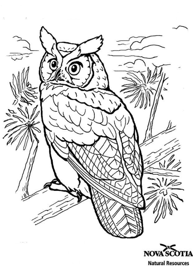 kidsnfunde  malvorlage vogel vogel