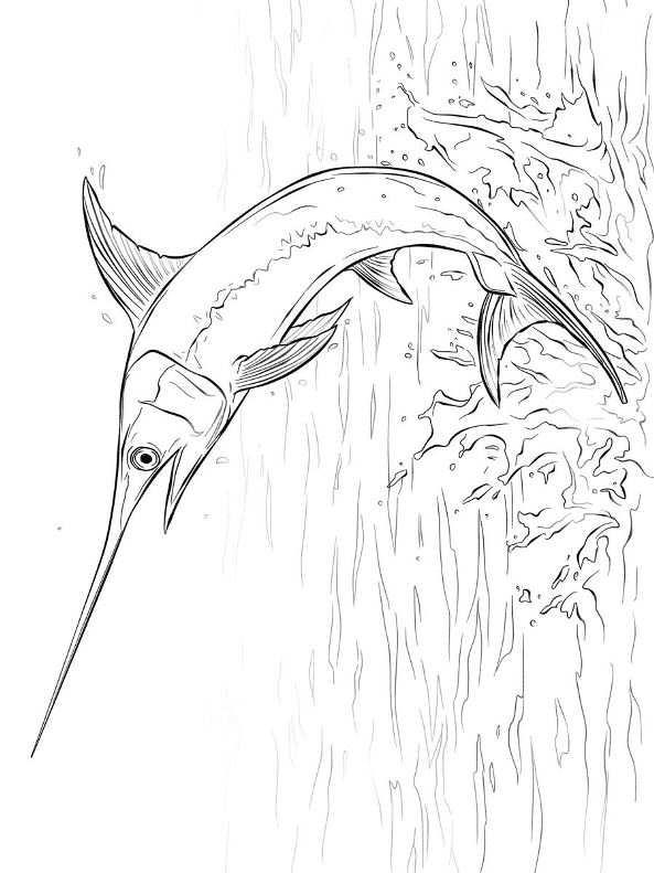 kidsnfunde  9 ausmalbilder von schwertfisch