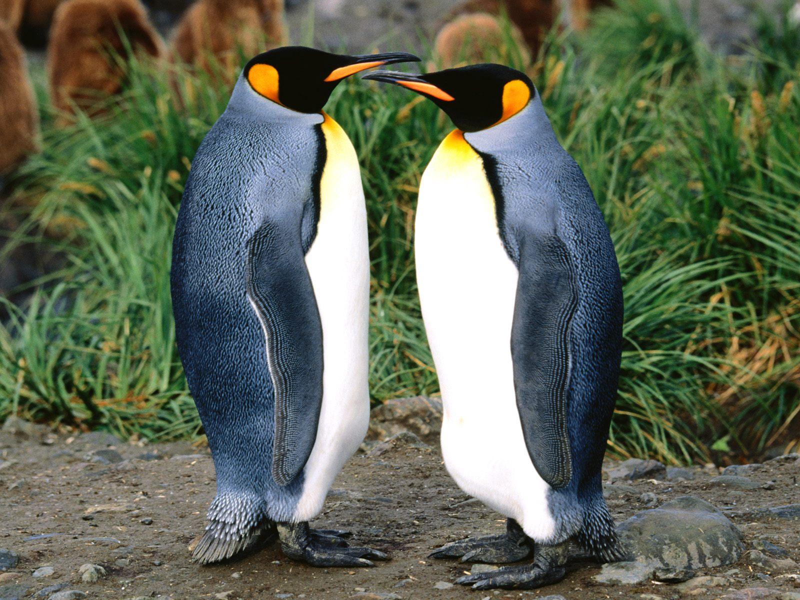 Kids N Fun De Hintergrundbild Pinguine