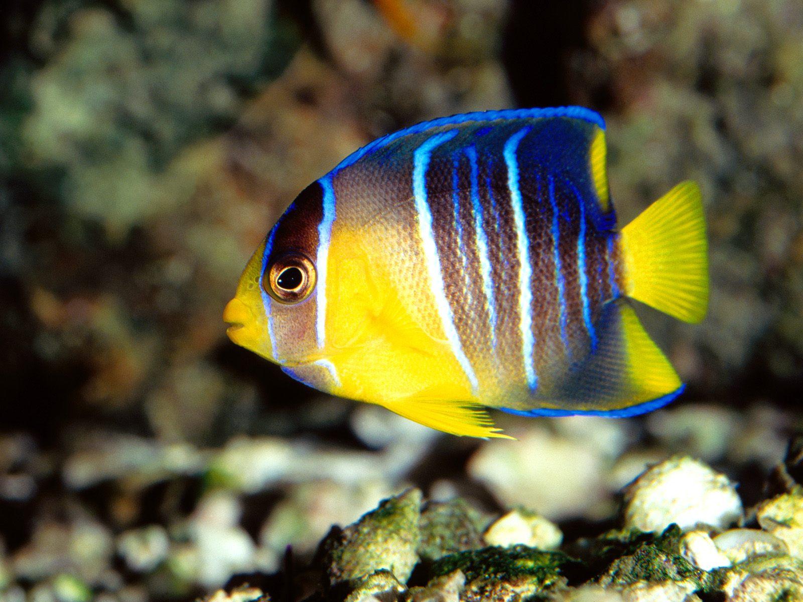 Kids n hintergrundbild tropische fische for Yellow fish tank water